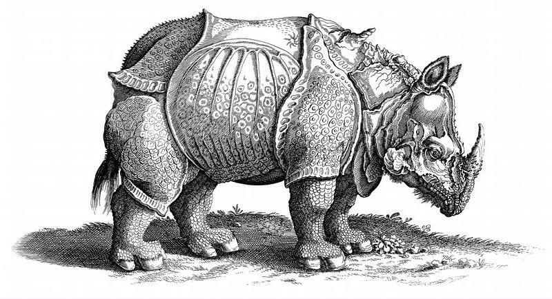 rhinoceros_a_duerer